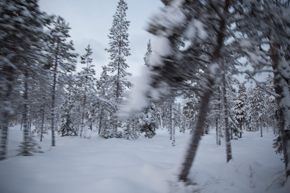 Husky Sledding Lapland-27