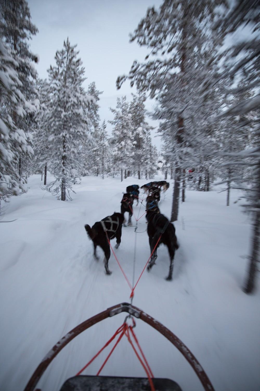 Husky Sledding Lapland-28