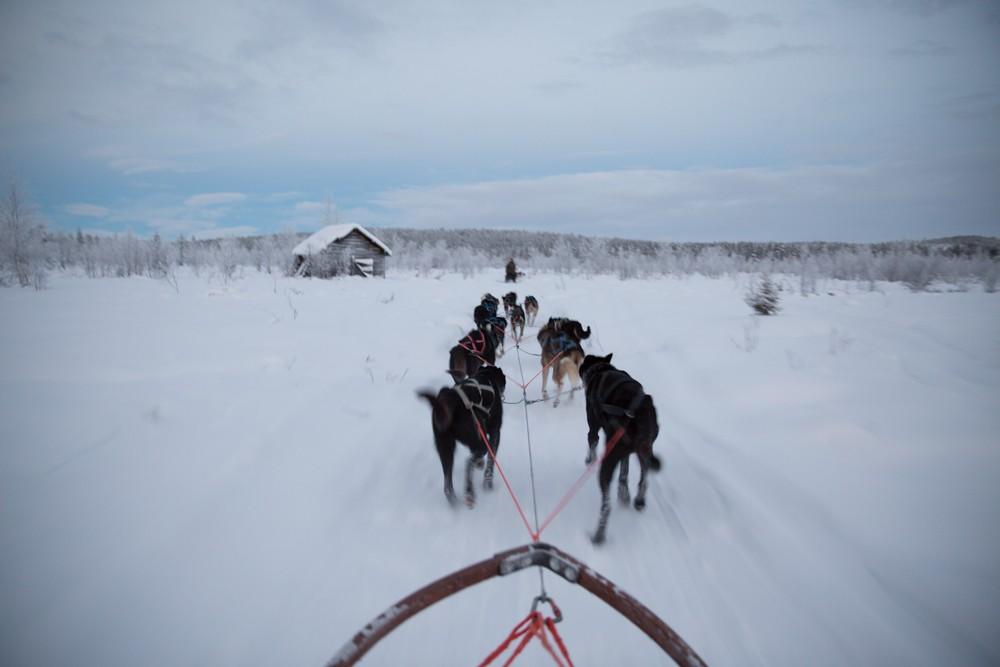 Husky Sledding Lapland-31