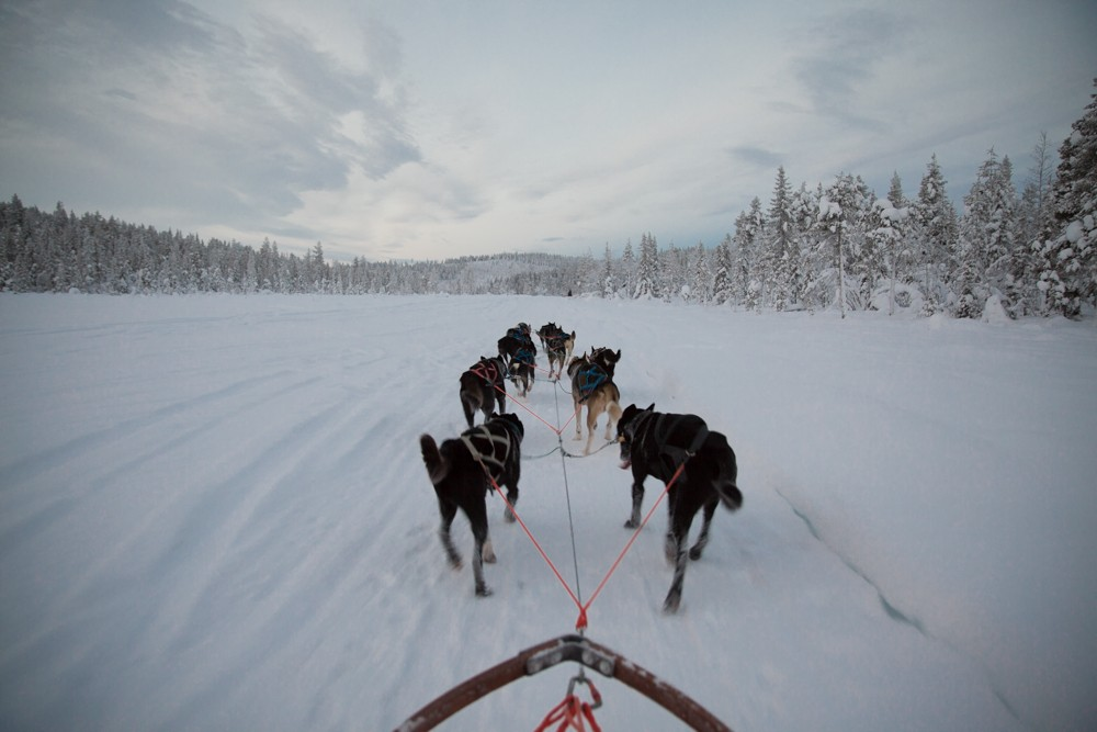 Husky Sledding Lapland-34