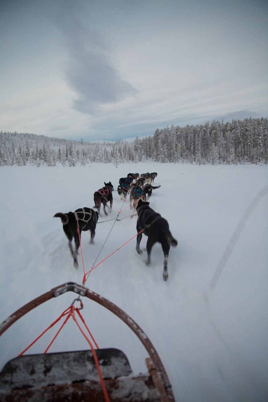Husky Sledding Lapland-35