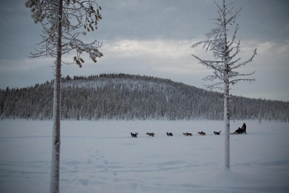 Husky Sledding Lapland-36