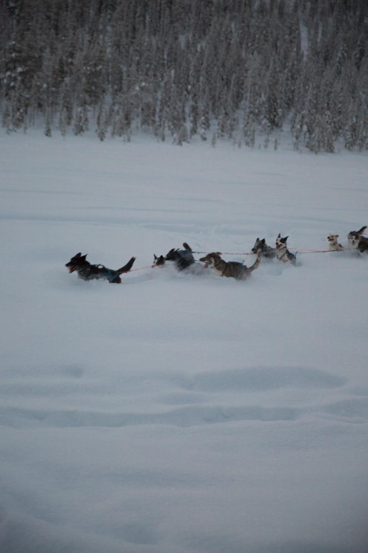 Husky Sledding Lapland-37