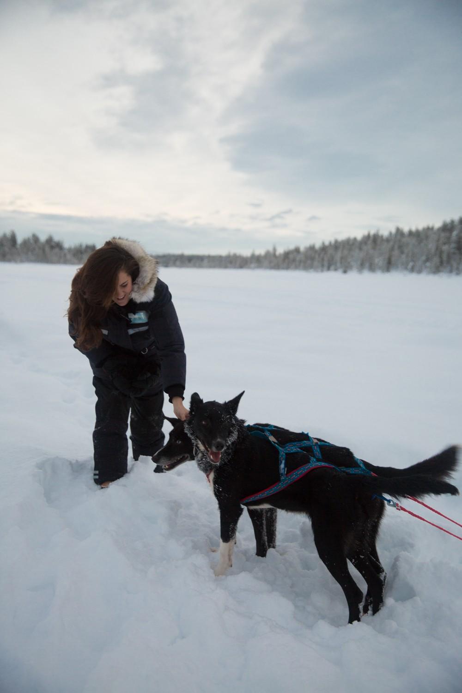 Husky Sledding Lapland-39