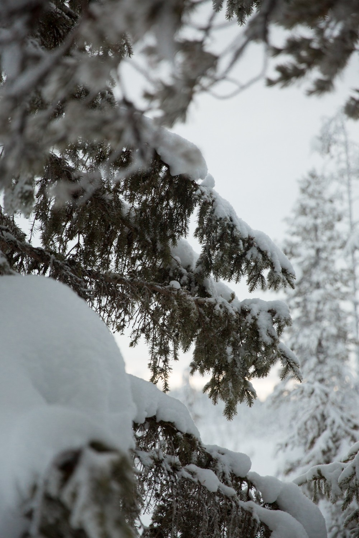 Husky Sledding Lapland-47