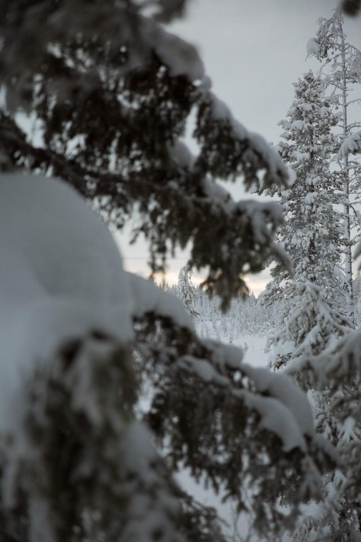 Husky Sledding Lapland-48