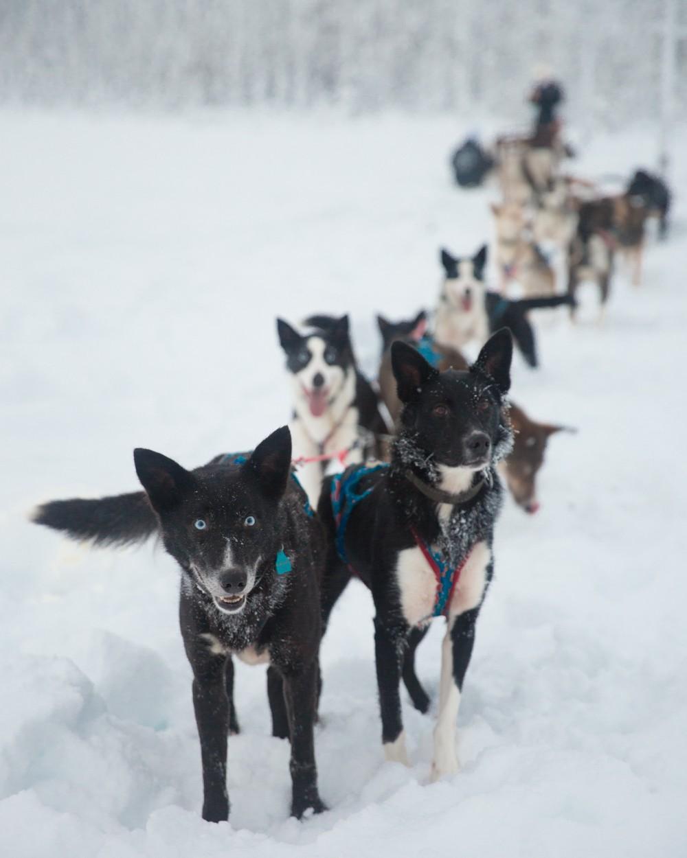 Husky Sledding Lapland-50