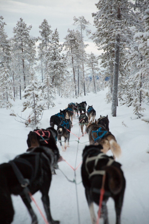 Husky Sledding Lapland-51