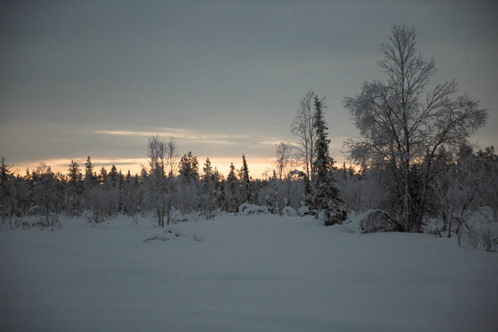 Husky Sledding Lapland-53
