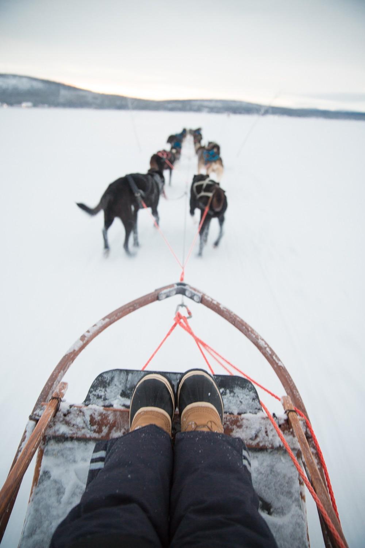 Husky Sledding Lapland-54