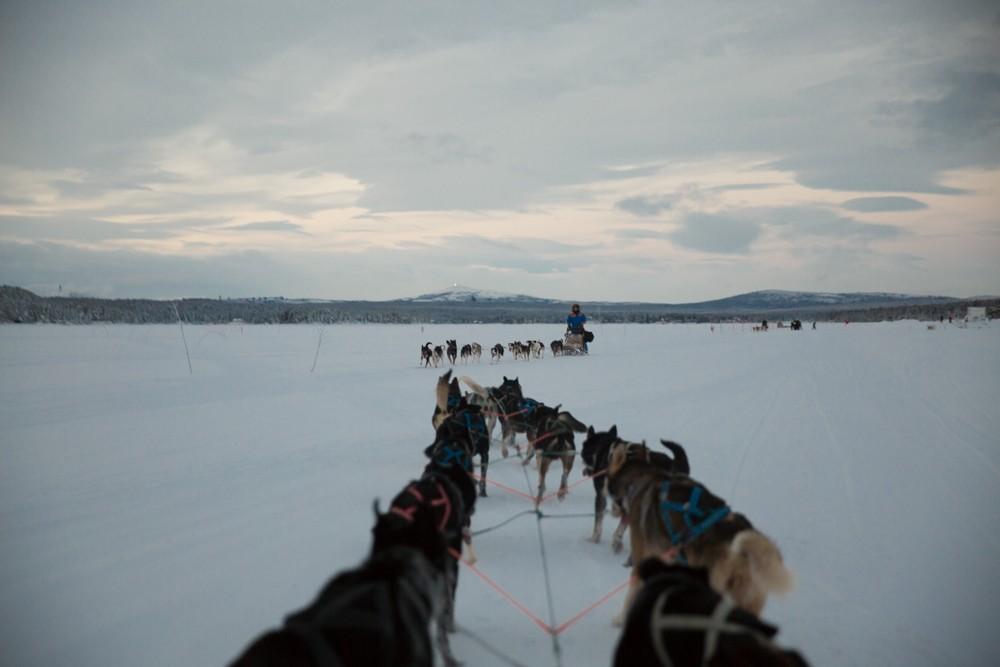 Husky Sledding Lapland-55