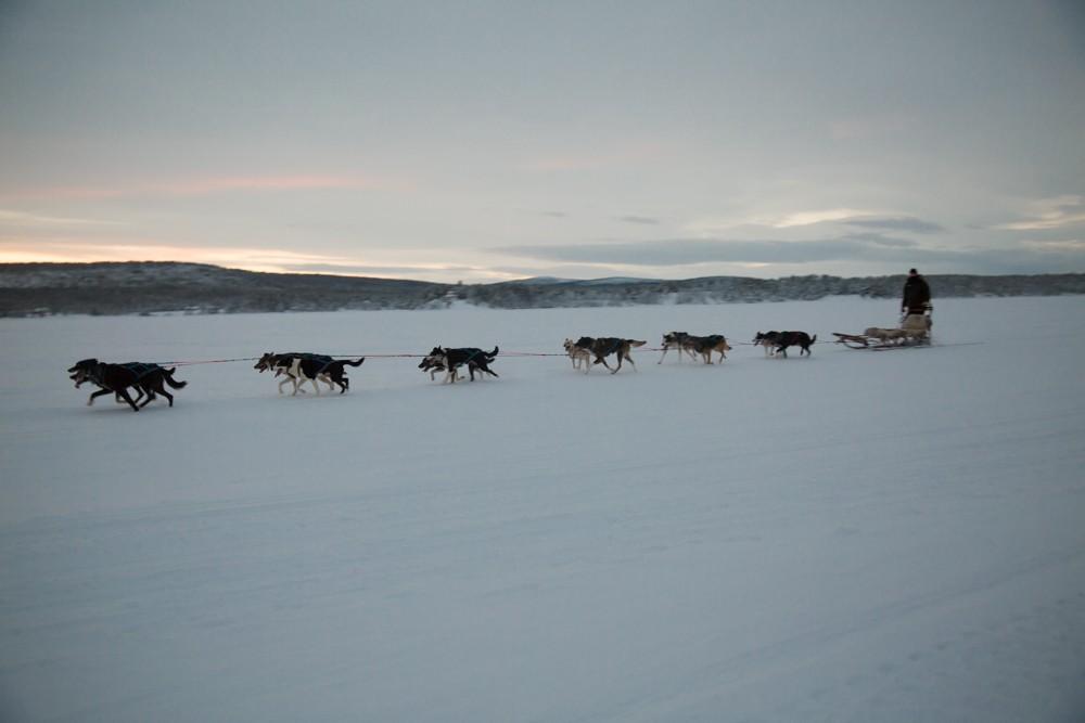 Husky Sledding Lapland-56