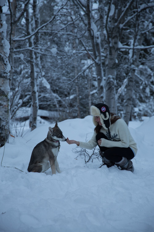 Husky Sledding Lapland-69