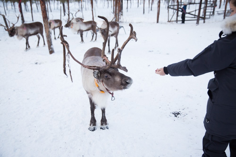 Reindeer and Saunas in Sweden -11