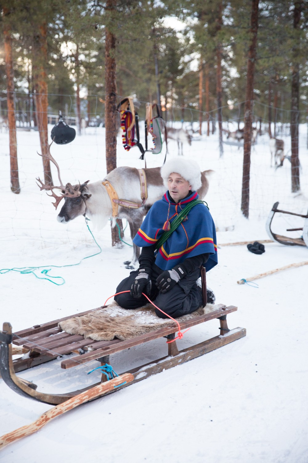 Reindeer and Saunas in Sweden -12