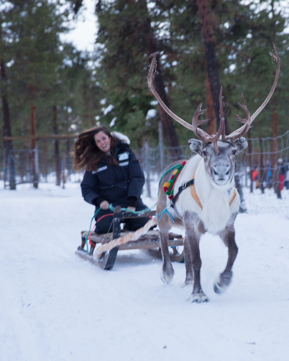 Reindeer and Saunas in Sweden -13