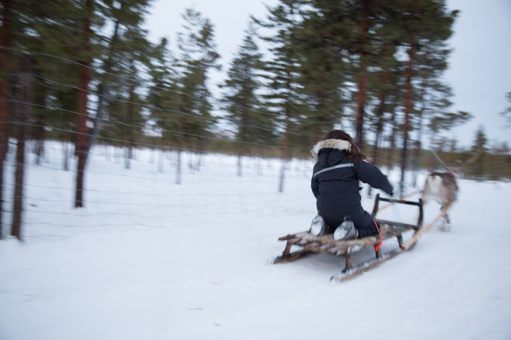 Reindeer and Saunas in Sweden -15