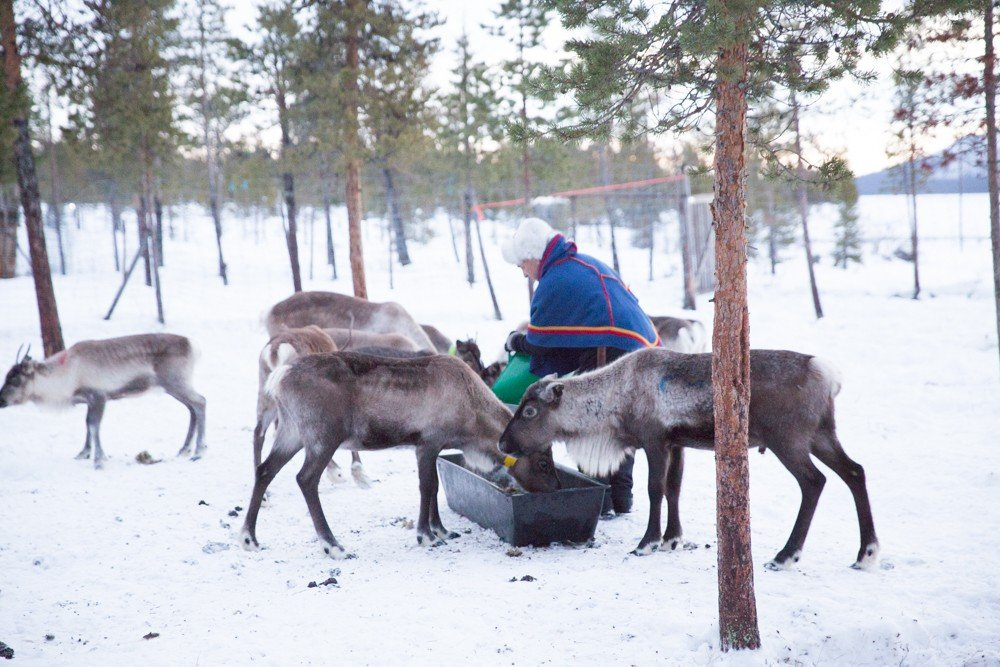Reindeer and Saunas in Sweden -5