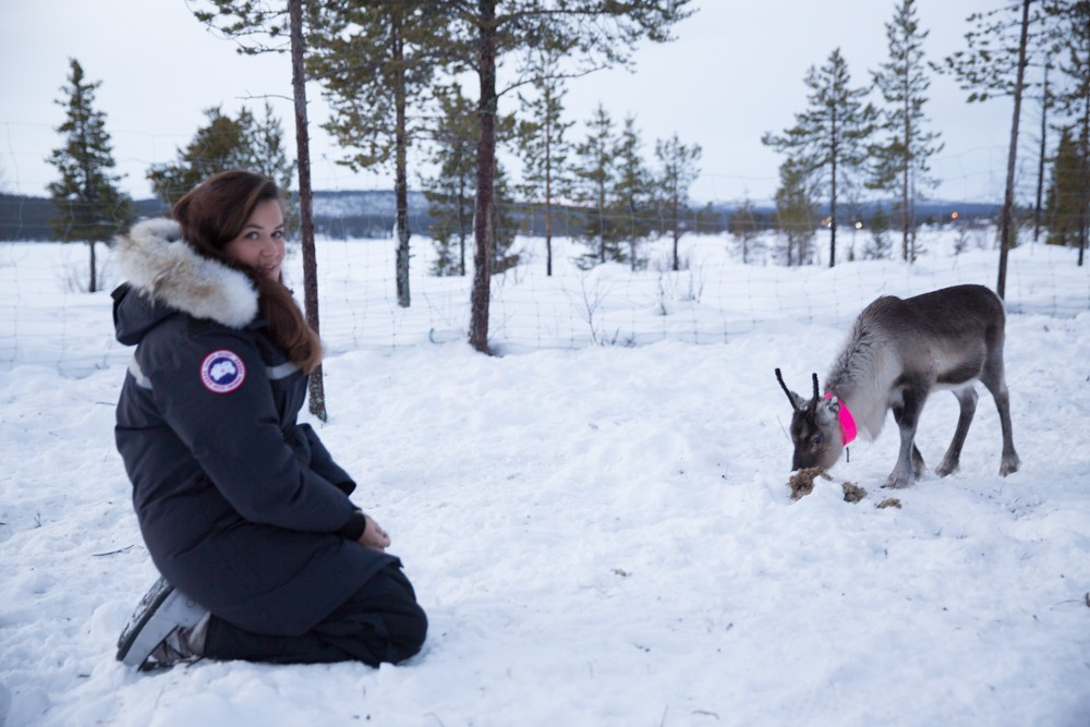 Reindeer and Saunas in Sweden -7