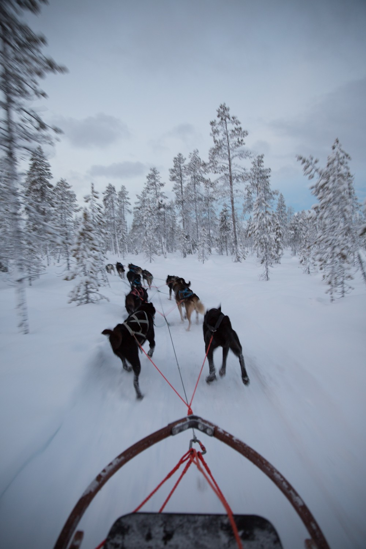 Husky-Sledding-Lapland-29