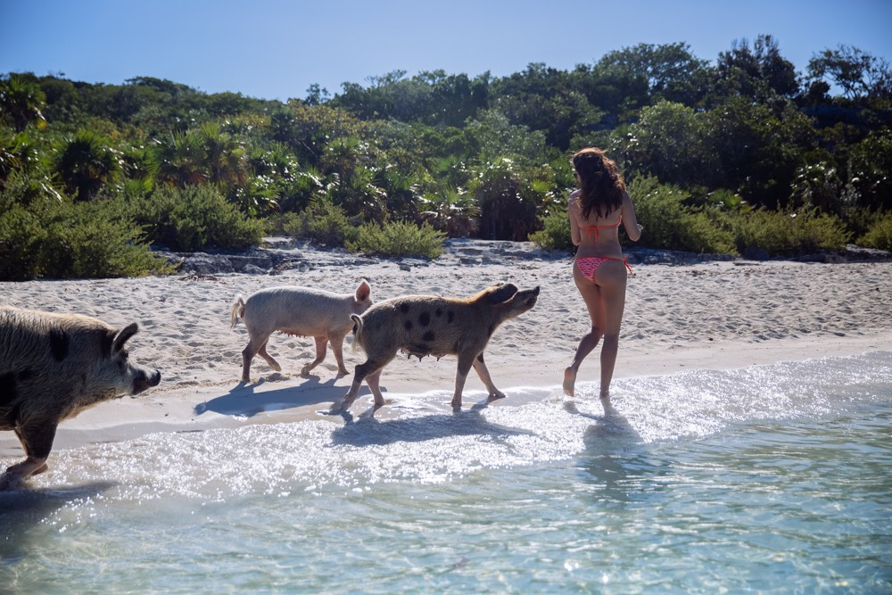 Swimming Pigs - Bahamas-13