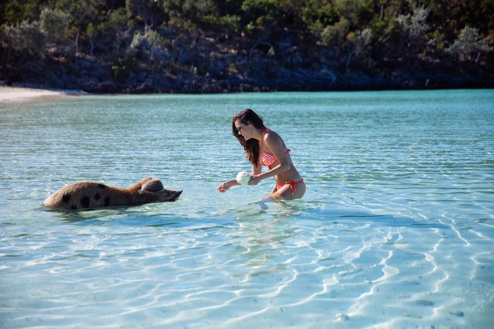 Swimming Pigs - Bahamas-14