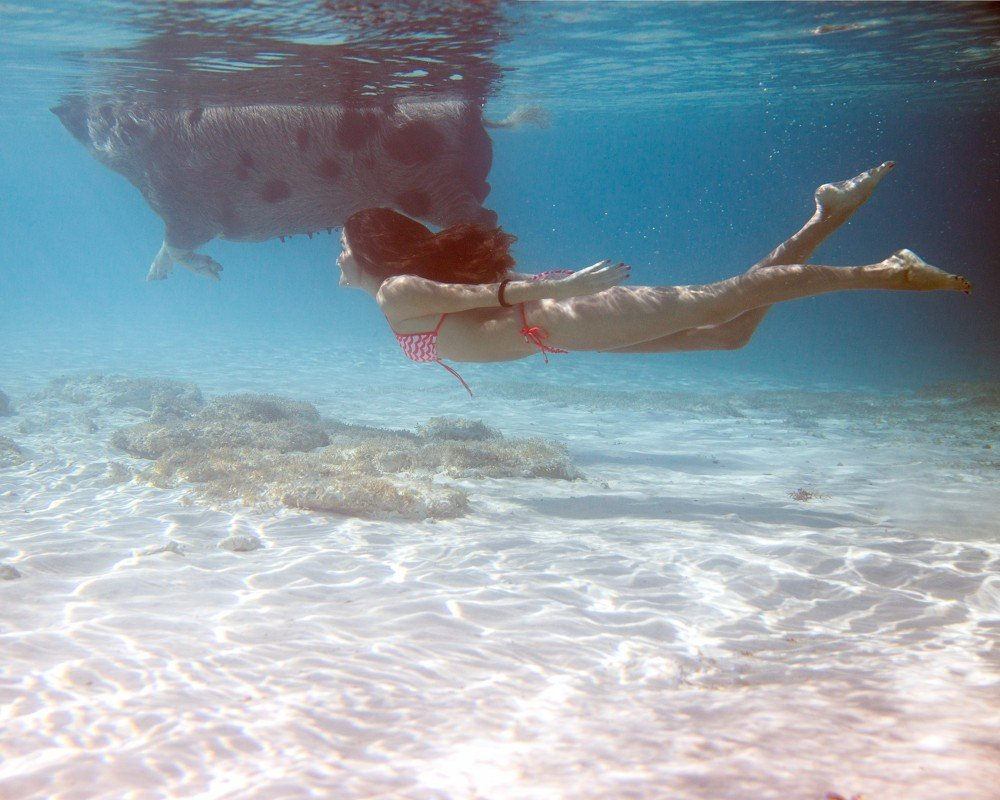 Swimming Pigs - Bahamas-15
