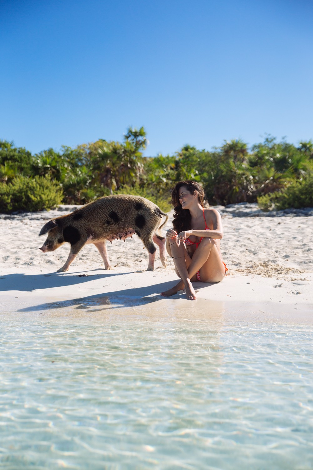 Swimming Pigs - Bahamas-17