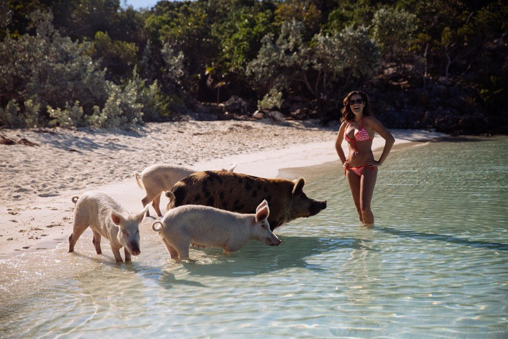 Swimming Pigs - Bahamas-19