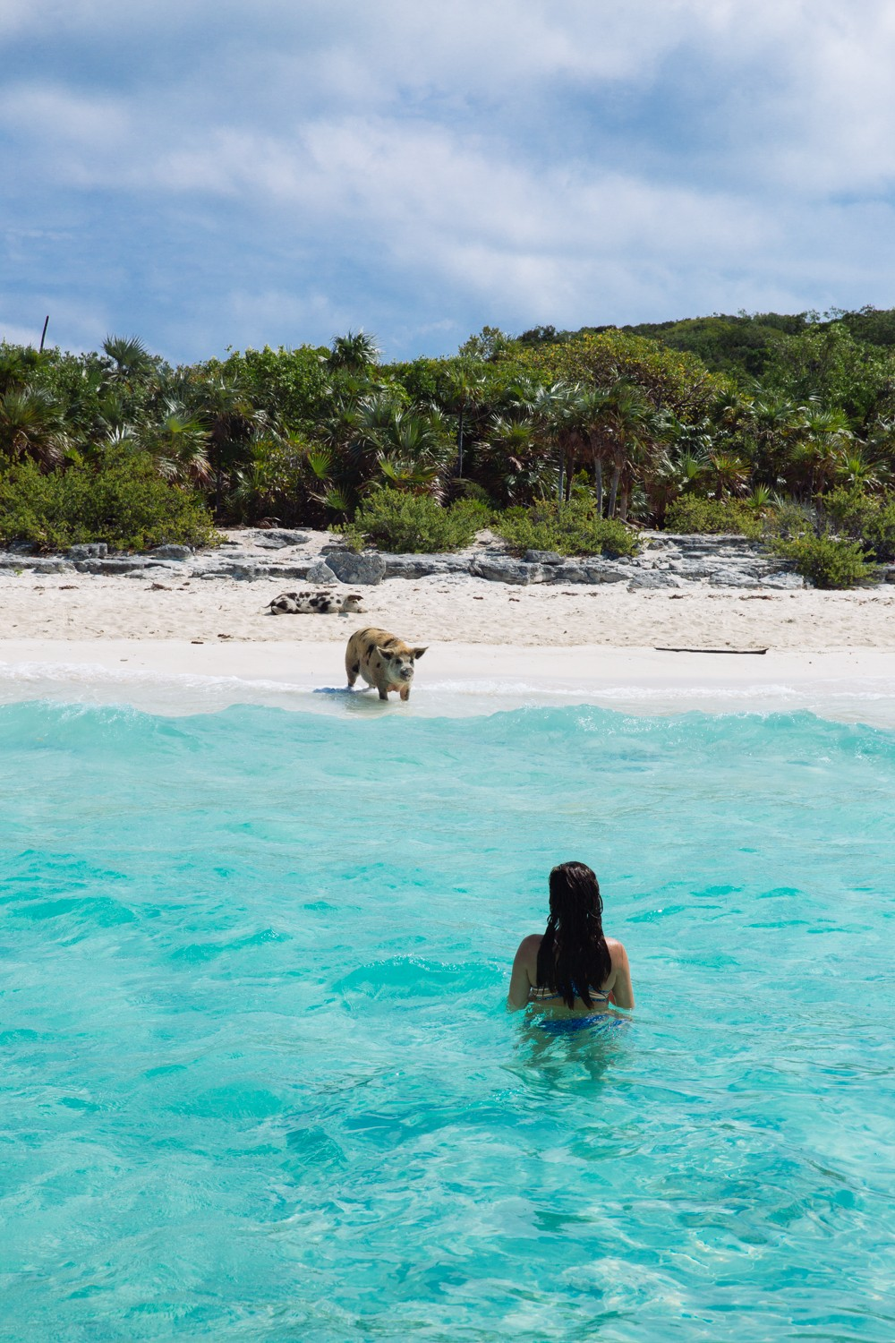Swimming Pigs - Bahamas-22