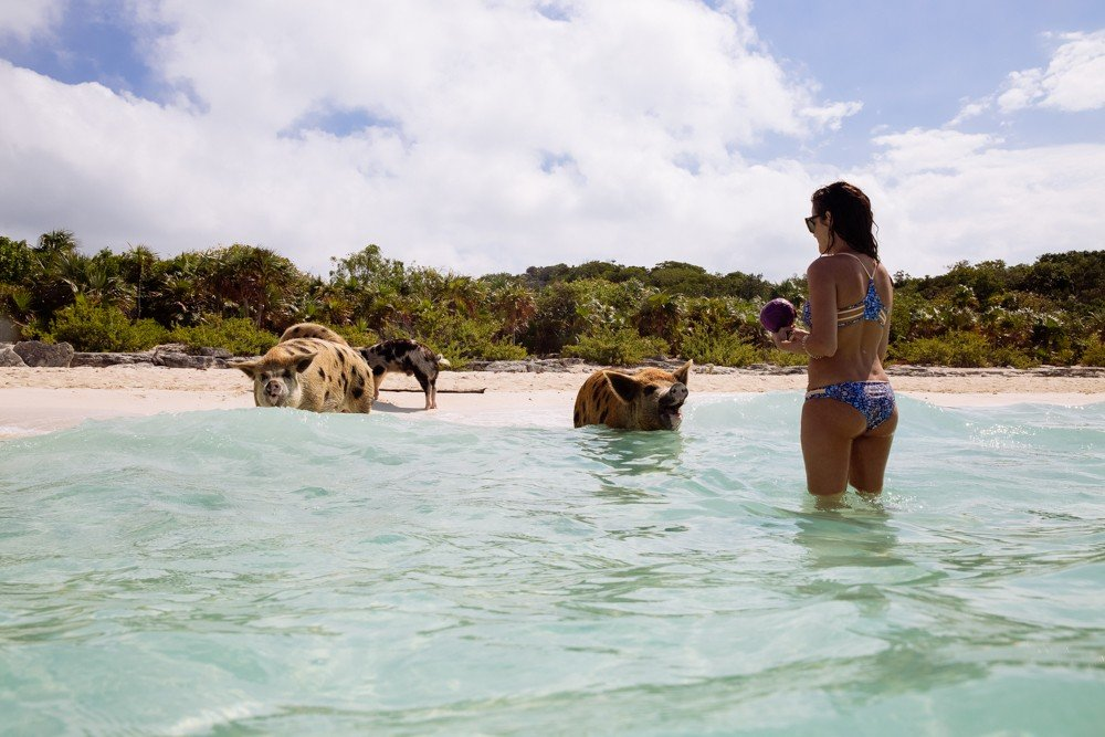 Swimming Pigs - Bahamas-23