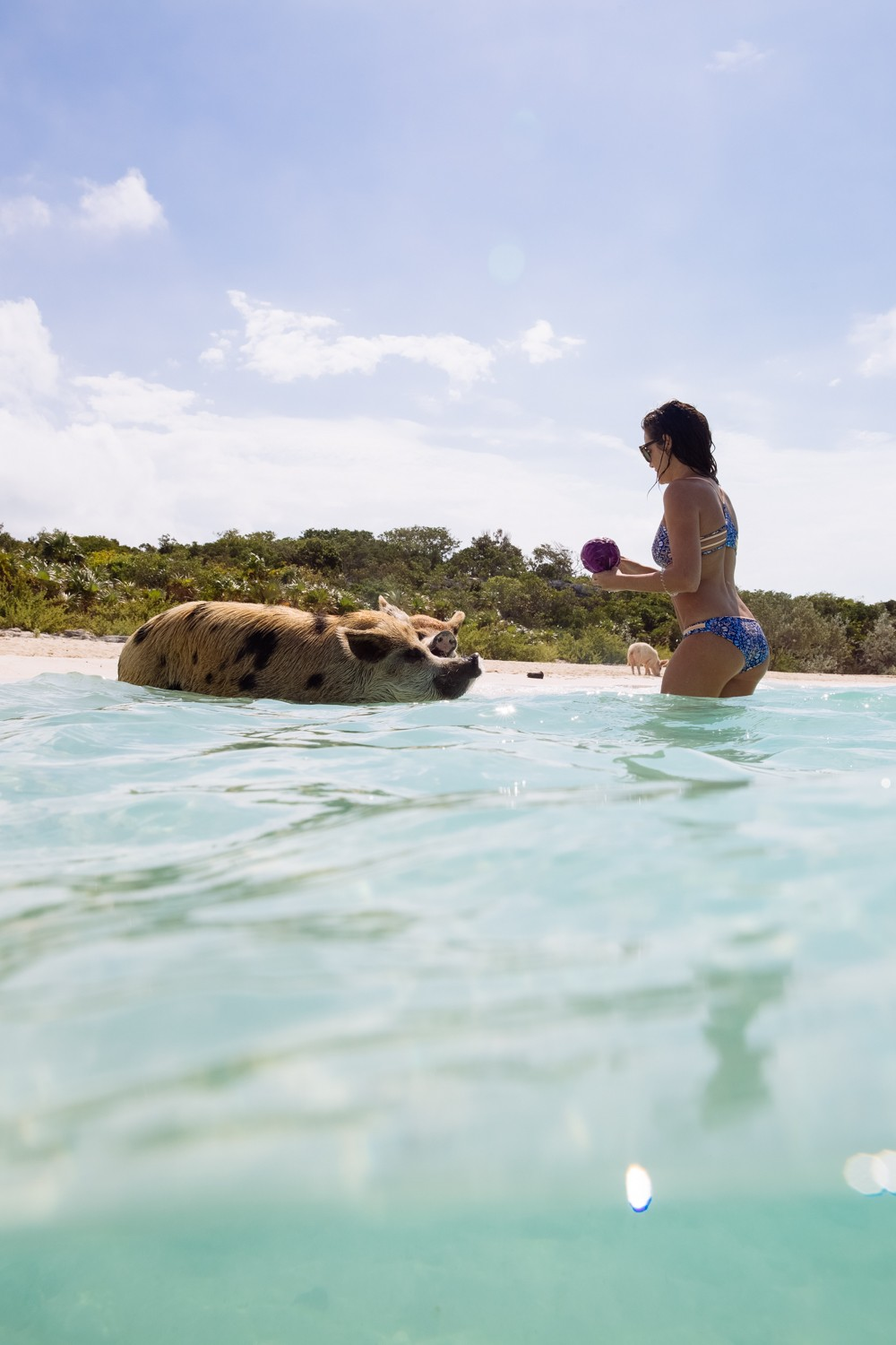 Swimming Pigs - Bahamas-24