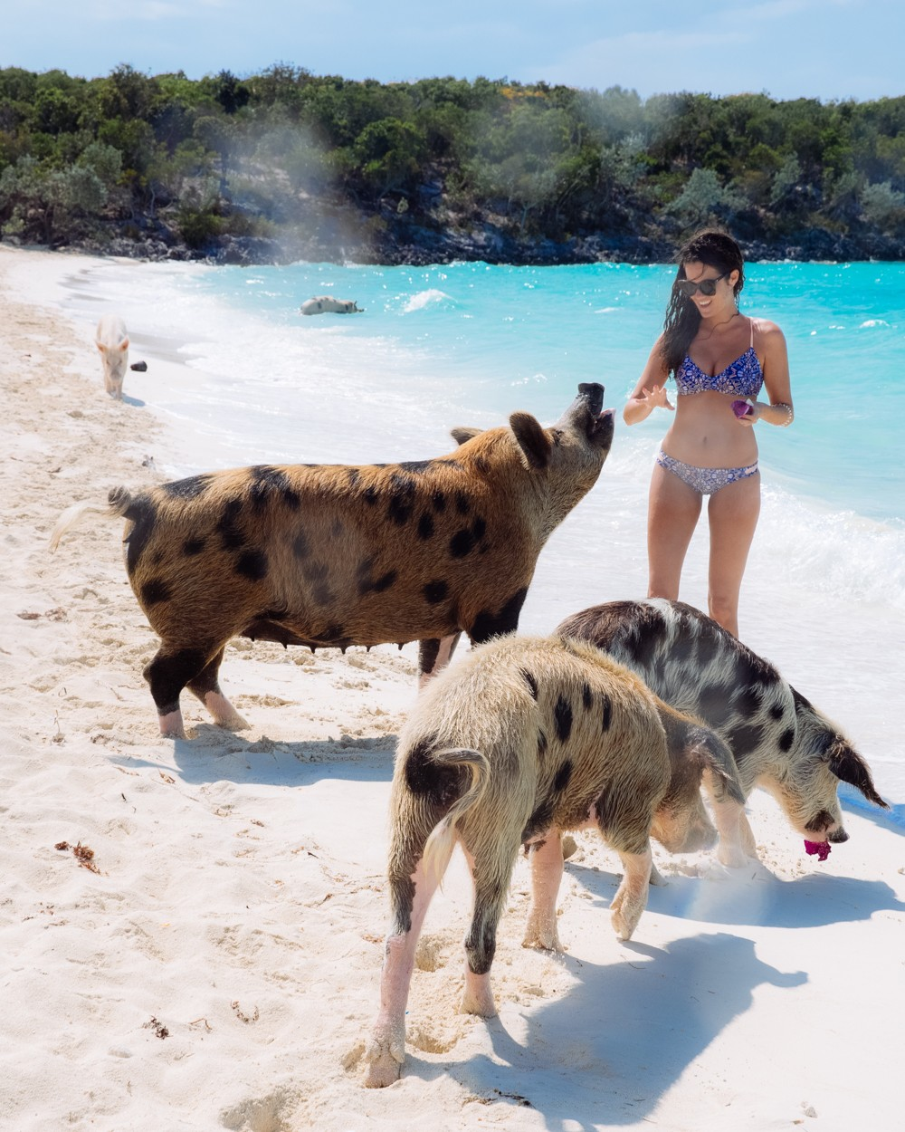 Swimming Pigs - Bahamas-29