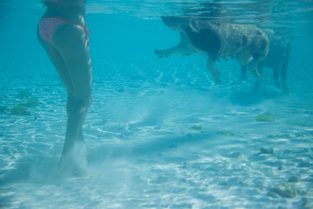 Swimming Pigs - Bahamas-5