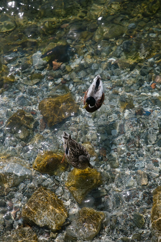 Islands of Lake Garda -6