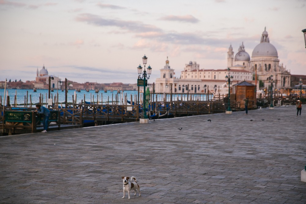 Sunrise in Venice-5