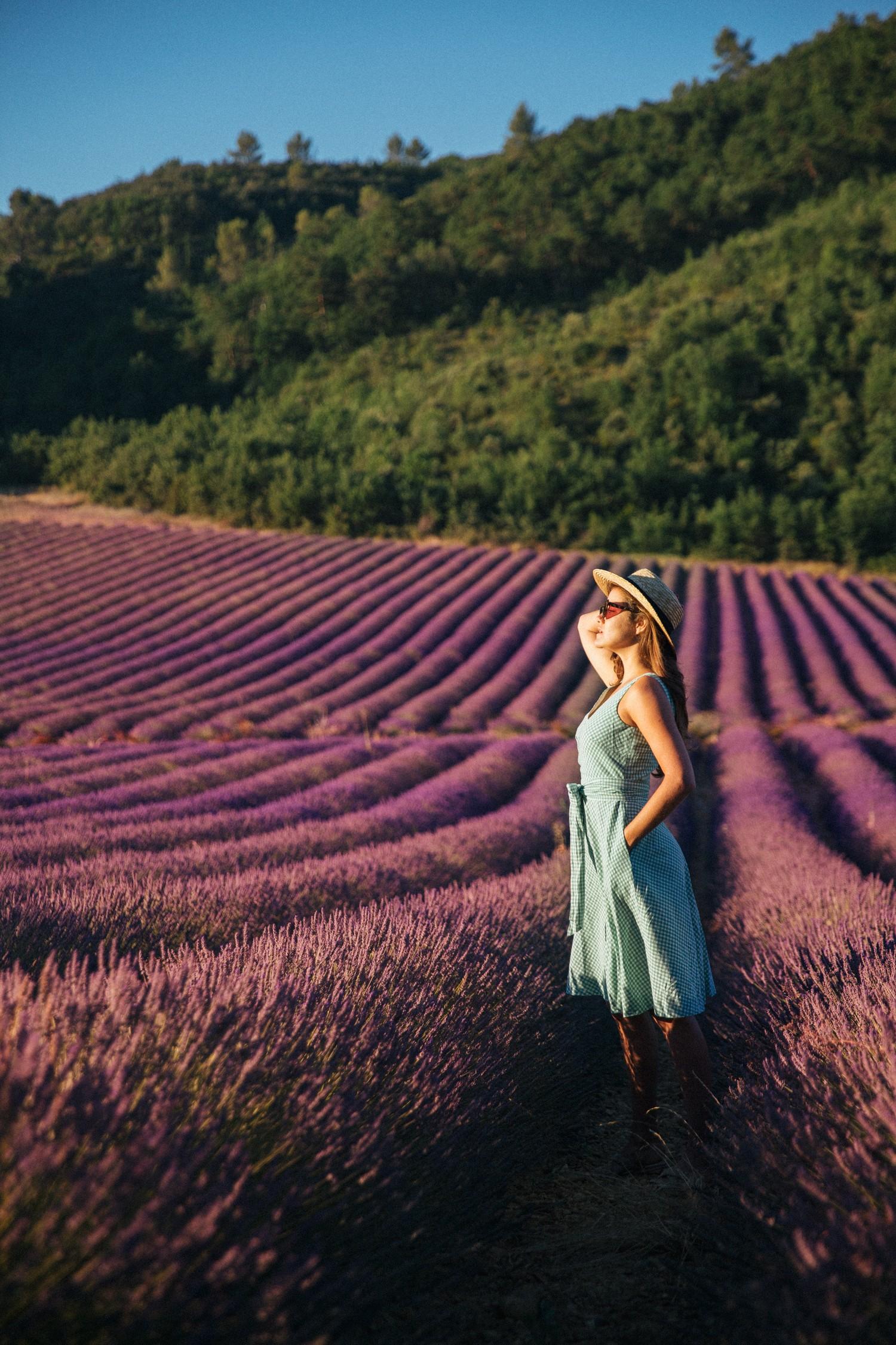 Lavender in Provence-1
