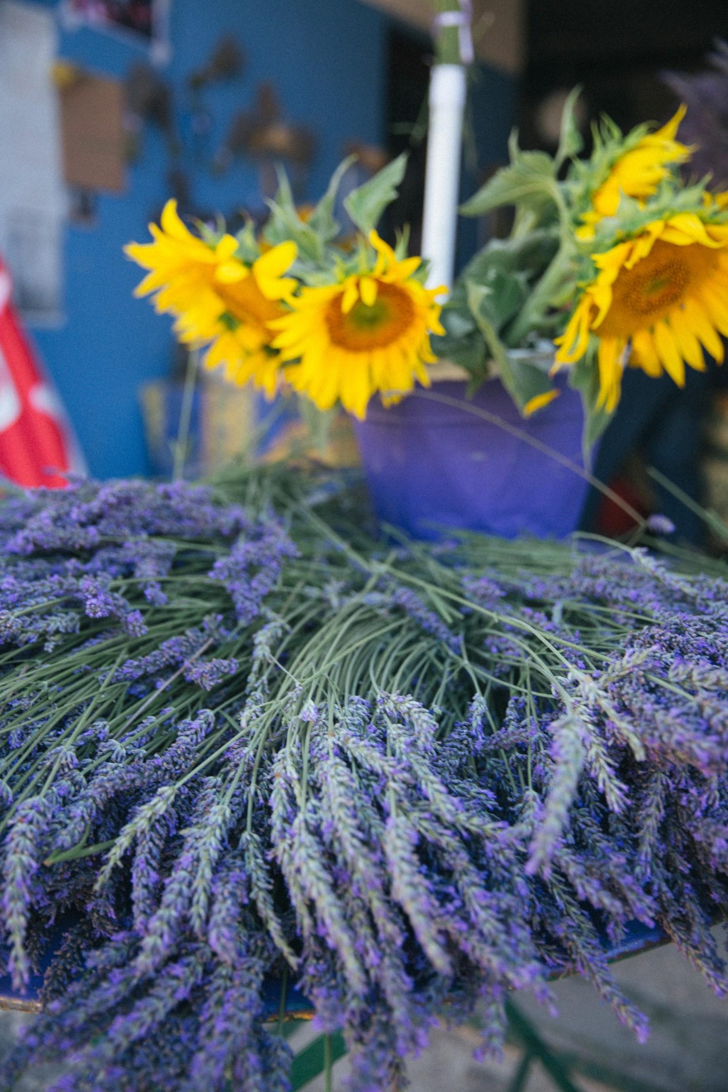 Lavender in Provence-11