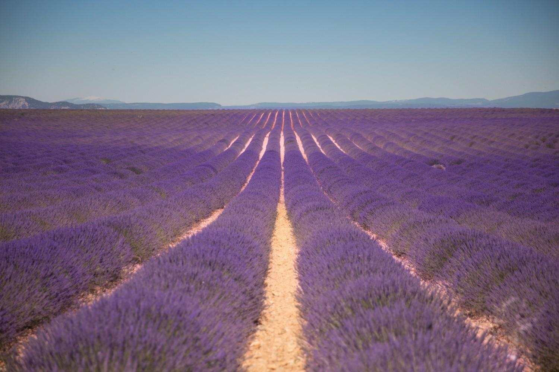 Lavender in Provence-25