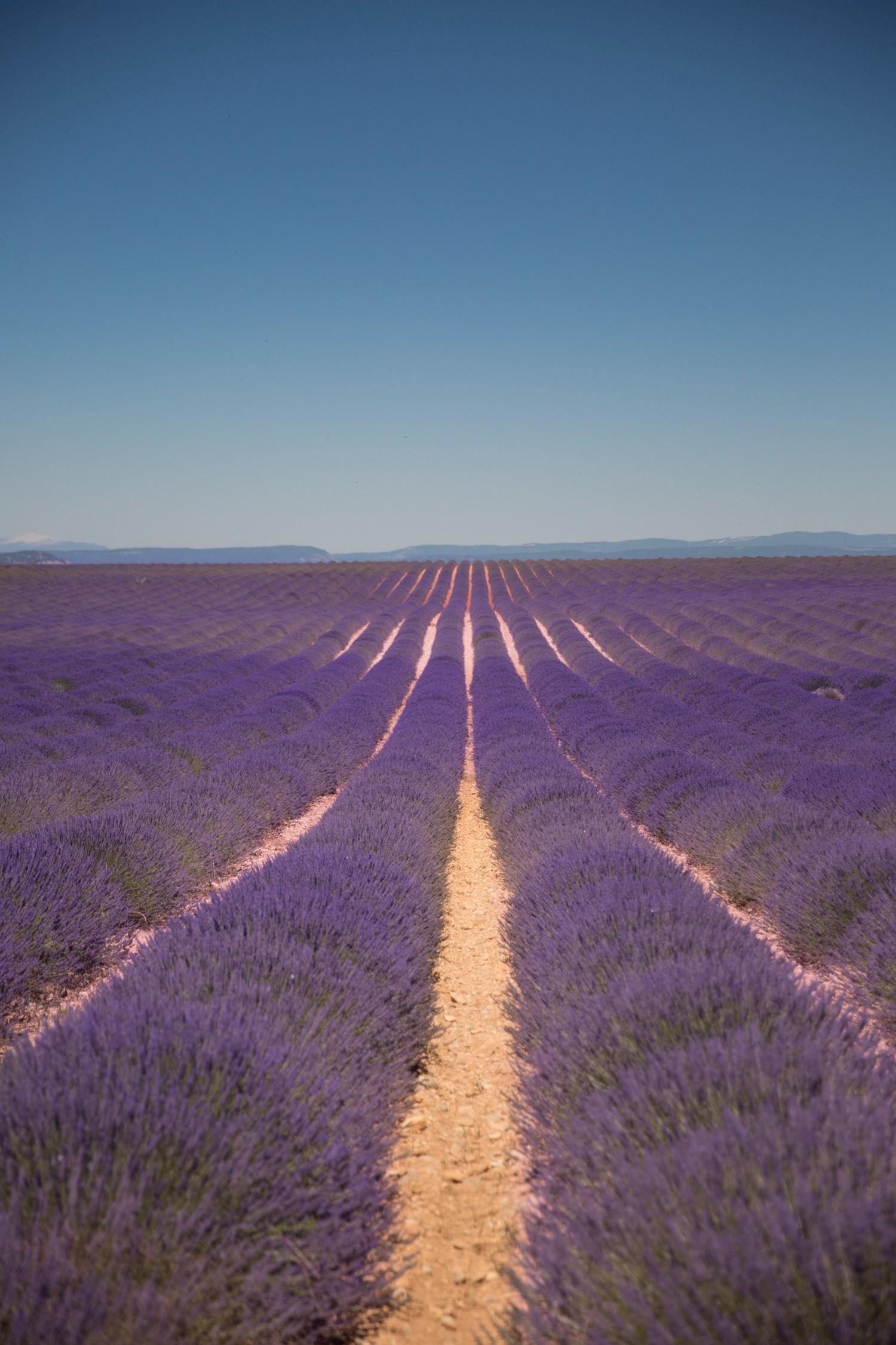 Lavender in Provence-28
