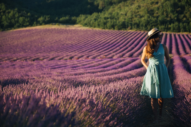 Lavender in Provence-3