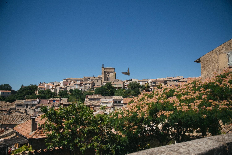 Lavender in Provence-4