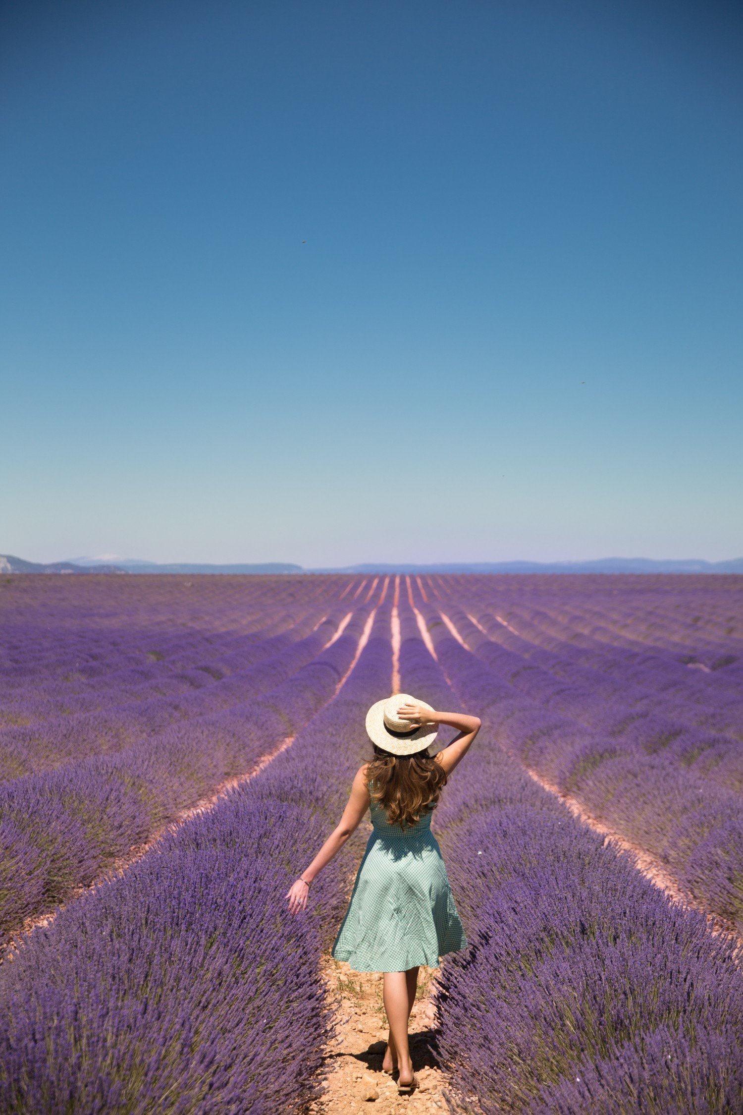 The Lavender Festival Provence The Londoner