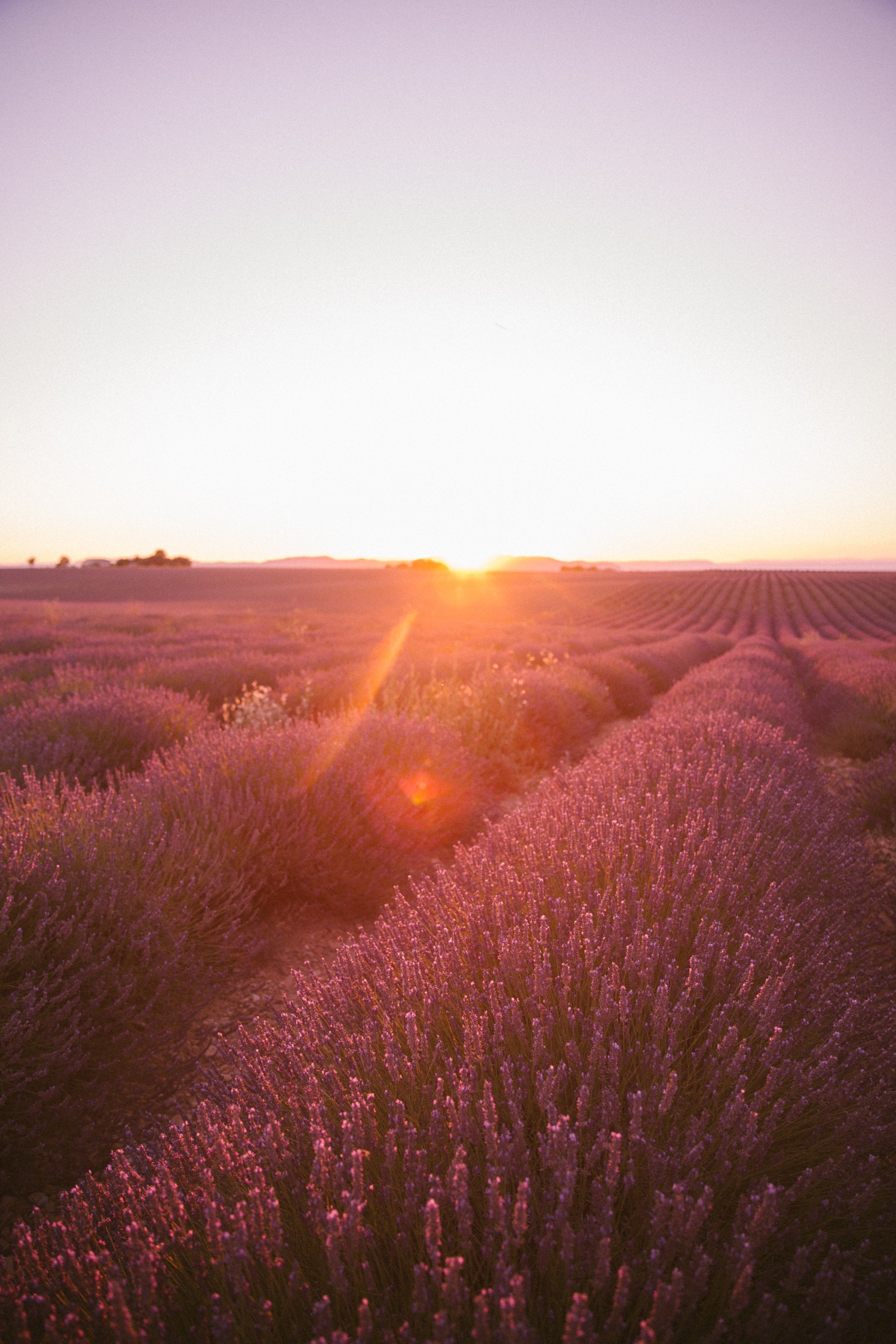 Sunset Lavender in Provence-16