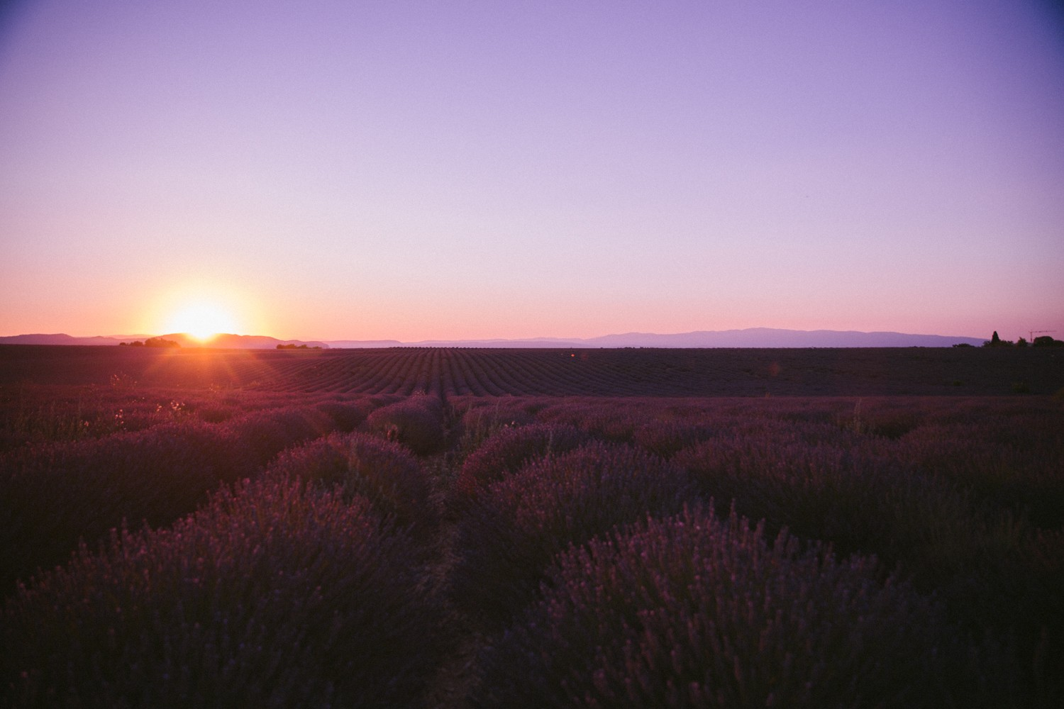 Sunset Lavender in Provence-18