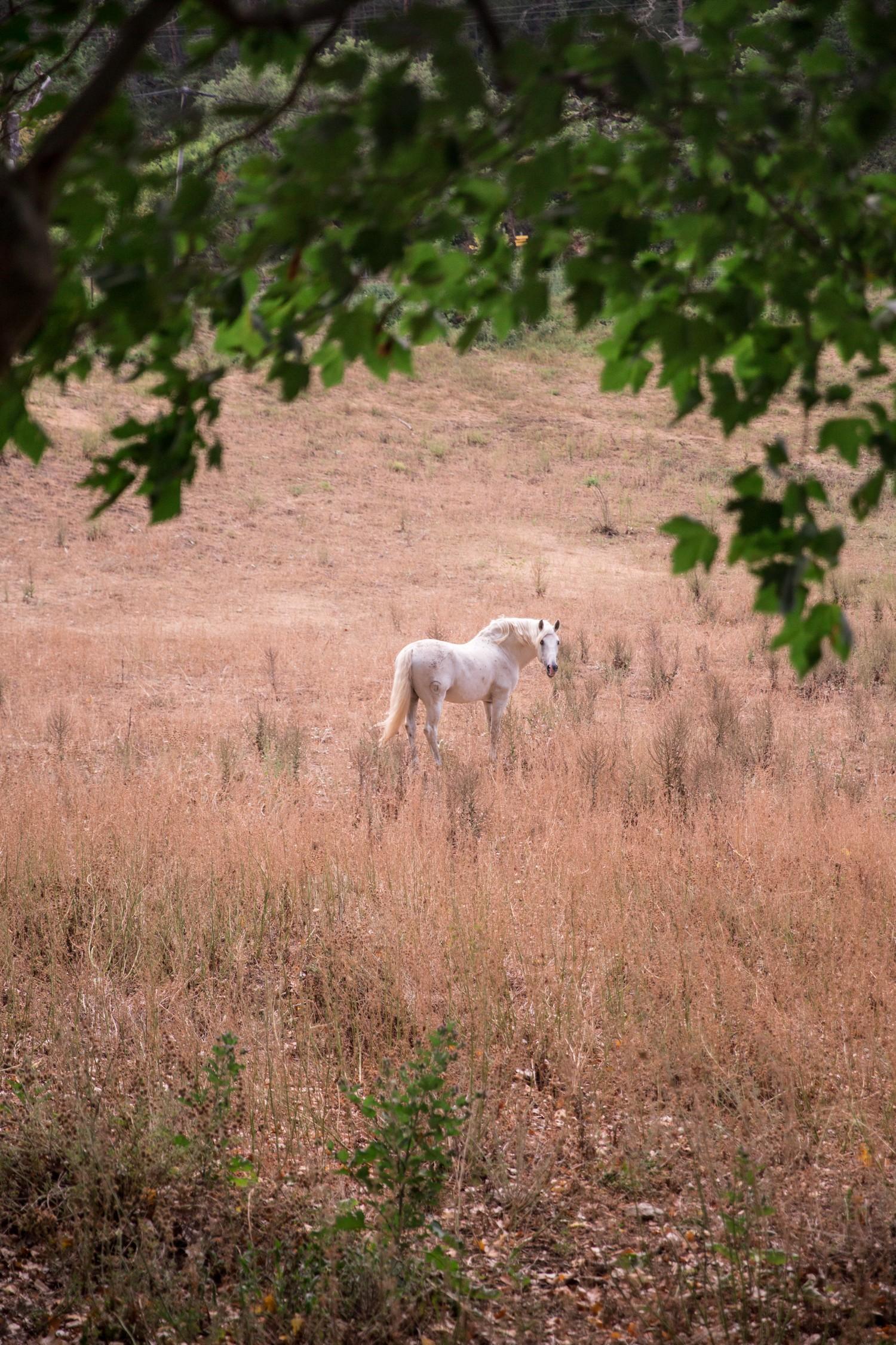 Esparron de Verdon, Provence-18