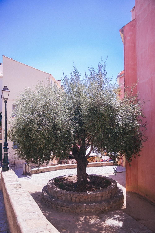 North Corsica-31