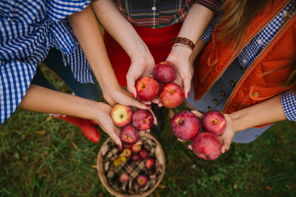 apple-picking-new-england-17