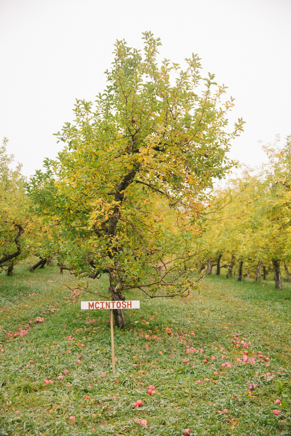 apple-picking-new-england-2