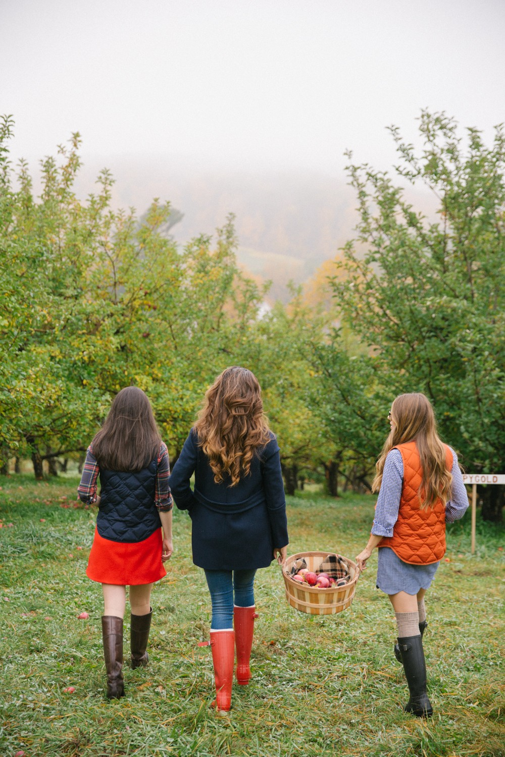 Apple picking in the mist